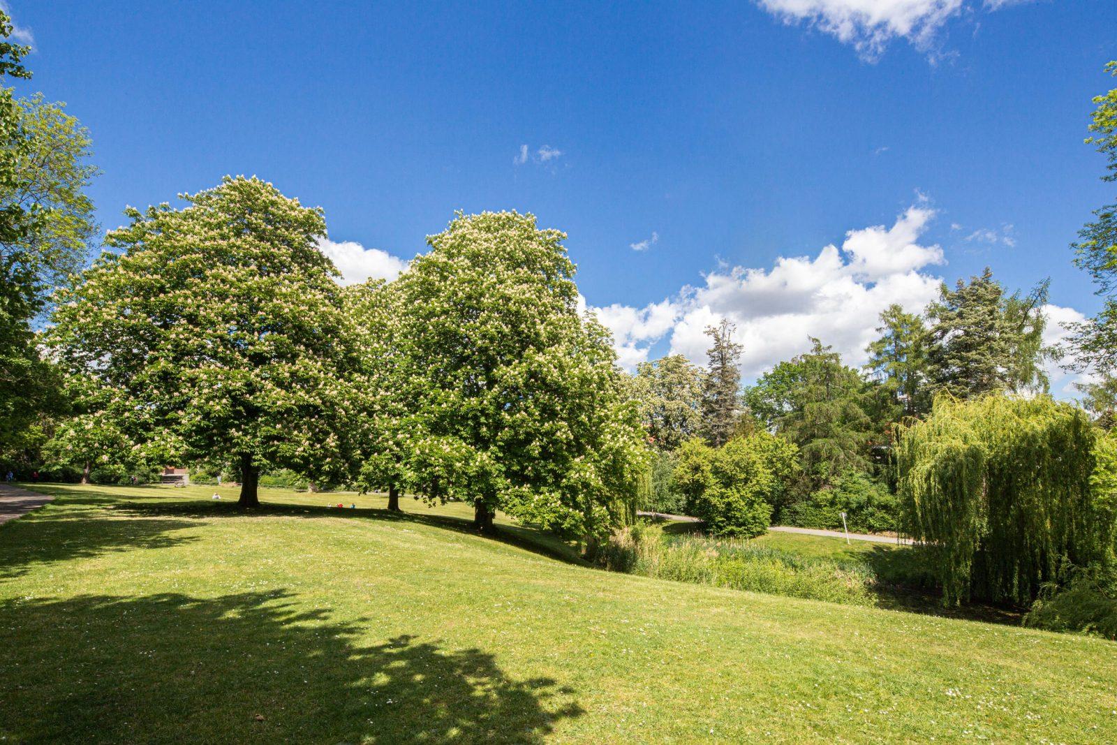 Eine mit Bäumen umgebene grüne Oase: Der Pompinius-Park am Landoltweg